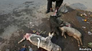 Cerdos muertos