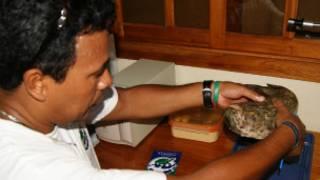 Especie nueva de pez hallada por un pescador en Galápagos