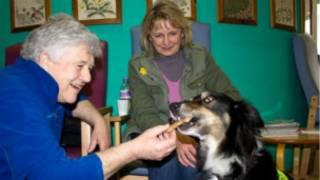 Kanser terapi köpeği Charlie