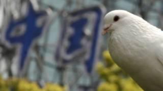 Virus flu burung