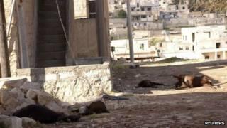 حیواناتی که به گفته ساکنان خان العسل در اثر حمله شیمیایی کشته شدند