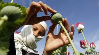 Мальчик на маковой плантации, провинция Нангархар, Афганистан