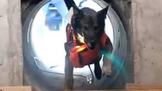 Anjing pencaru