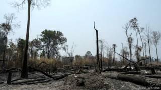 Global Witness nói hai công ty của Việt Nam đang 'tàn phá môi trường'