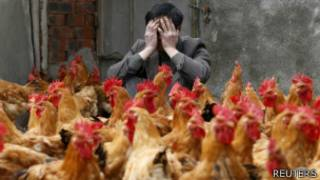 Chinese breedr covers hmis face as he sits in behind his chickens