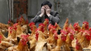浙江养殖户和他的鸡