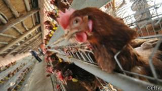 Granja avícola en EEUU