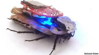 La cucaracha cyborg