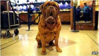 इटली में कुत्तों से तस्करी