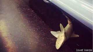 Мертвая акула
