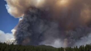 kebakaran_hutan_as