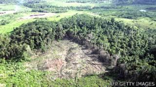 Desforestación en la Amazonía
