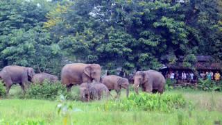 हाथी, इंसान, संघर्ष