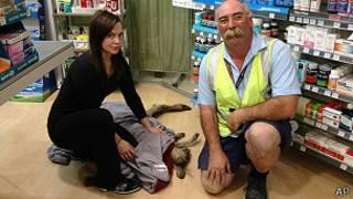 Спасатели усмирили кенгуру с помощью транквилизатора