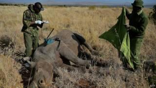 Сотрудники Кенийской природоохранной службы