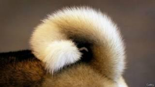 rabo de cachorro | Getty