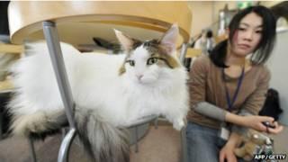 مقهى قطط