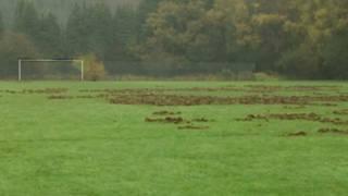 सुअरों ने खोदा फ़ुटबॉल का मैदान