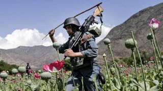 Noman ganyayyaki masu sa maye a Afghanistan