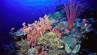 Corais na Indonésia (Arquivo/AP)
