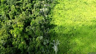 Desforestación en la Amazonia