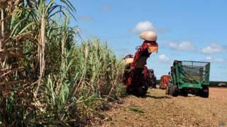 Cana-de-açúcar em Goiás (ABr)