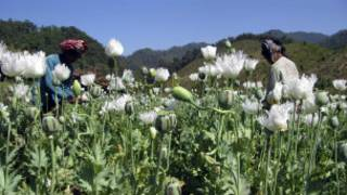 Villagers at Opium fields in Shan State, Burma