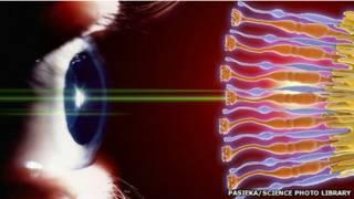 Ilustración de ojo y retina