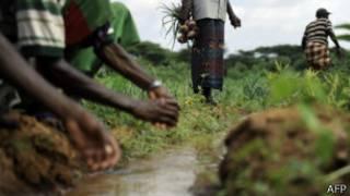 مساحات خضراء واسعة بالصومال