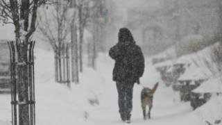 美國密歇根一居民風雪中遛狗