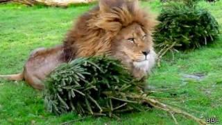 Лев с елкой