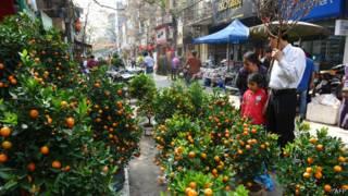 Chọn mua quất cảnh ở Hà Nội