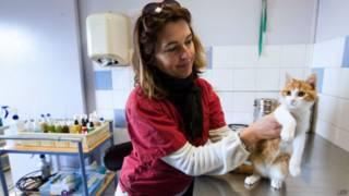 Veterinária cuida de Oscar | Foto: AFP
