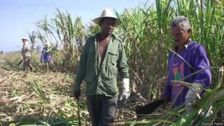 Macheteros cubanos
