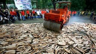 一些非政府組織呼籲完全禁止所有象牙買賣,並摧毀世界各地現有的象牙庫存。