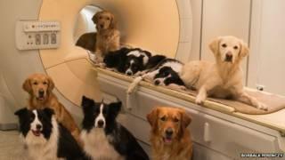 Cachorros em aparelho de ressonância magnética (Borbala Ferenczy)