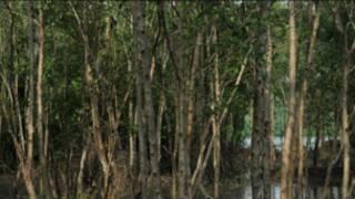 mangrove_