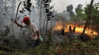 Kebakaran lahan