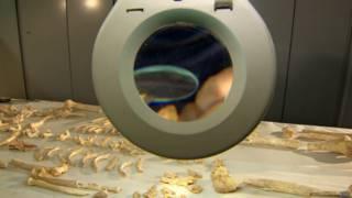 Esqueleto encontrado no Sudão | Foto: BBC