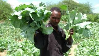 Wajir shambani