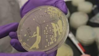 这项研究成果把人工合成生物技术中的理论变成现实