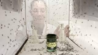 डेंगू, मच्छर