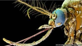 Las enfermedades que produce la picadura del mosquito