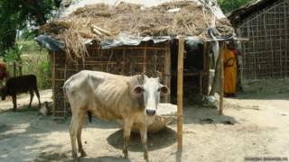 मुरहो गांव का मुसहर टोला