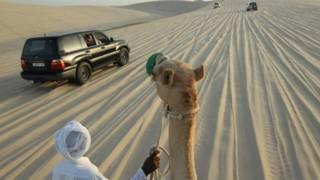 Homem conduz camelo no Catar (foto: AFP)