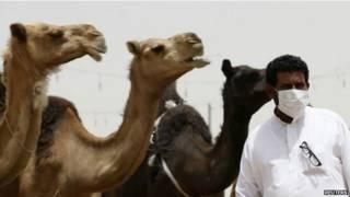 Homem usa máscara ao passar por camelos (Reuters)