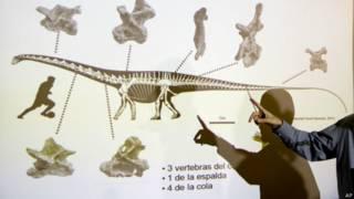 Презентация находки динозавра