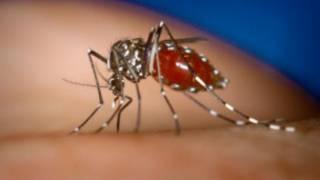 dengue_fever