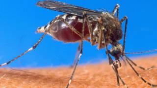 Mosquito transmissor da malária (AFP)