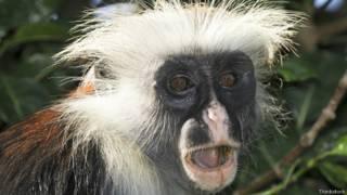 Mono con cara de sorpresa